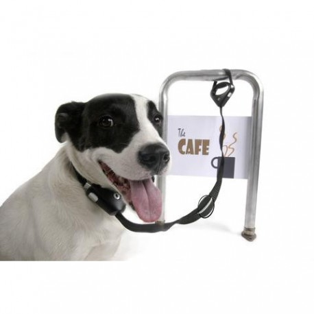 Collar correa antirrobo para perros Safe Spot