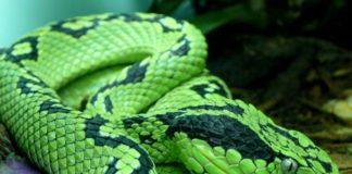 Guía básica para cuidar de una serpiente