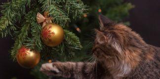 como proteger el arbol de navidad de la curiosidad de tu gato