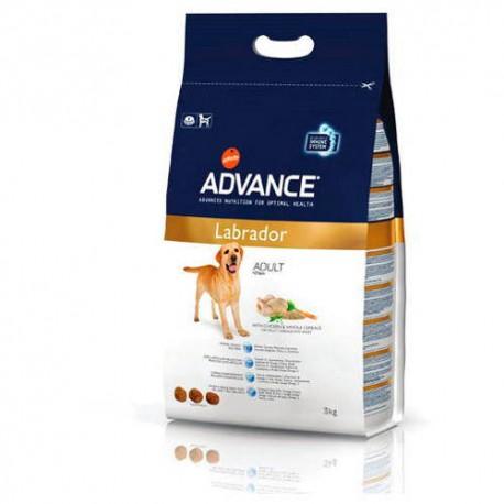 Advance Labrador pienso perro