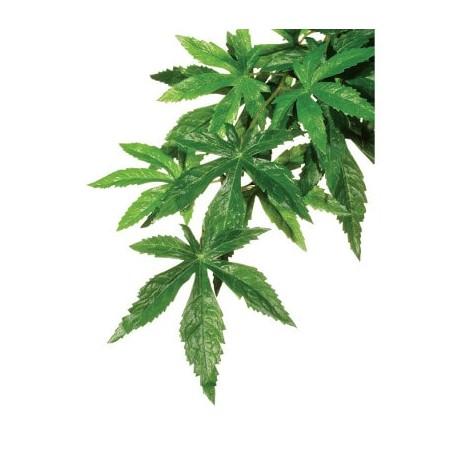 Planta de seda colgante Abuliton