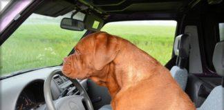 7 consejos para viajar en coche con perros