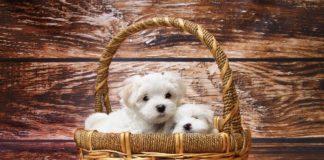 Como saber si una guardería canina es segura para tu perro