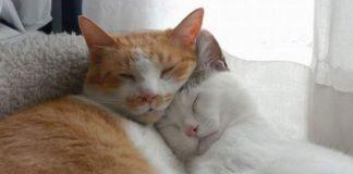 Cuando y como usar feliway para reducir el estrés de los gatos