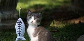 mejores juegos para gatitos